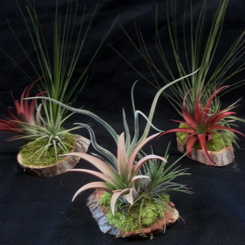 3 Plant Wood Arrangement