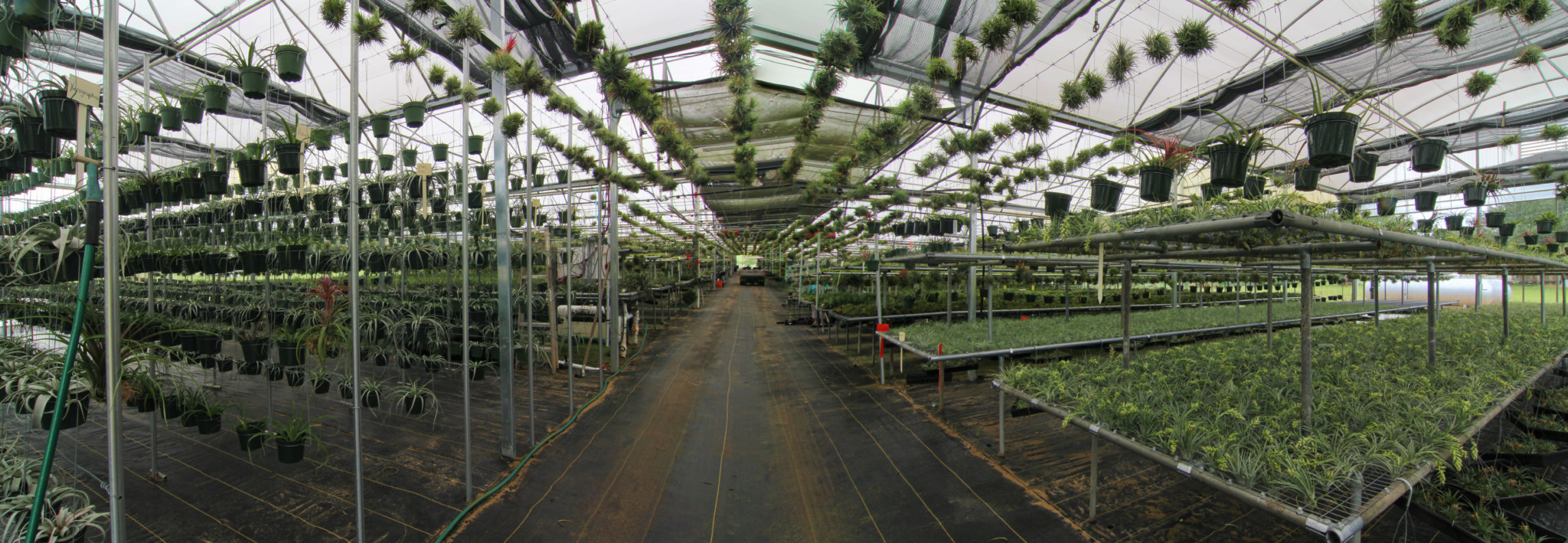 Russell's Bromeliads greenhouse