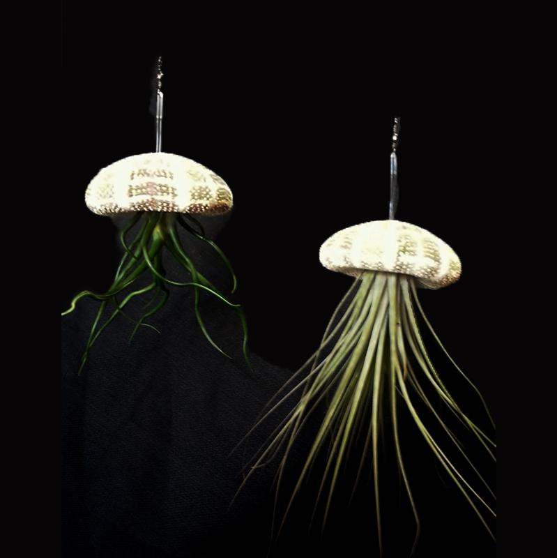 Hanging Sea Urchin Shells