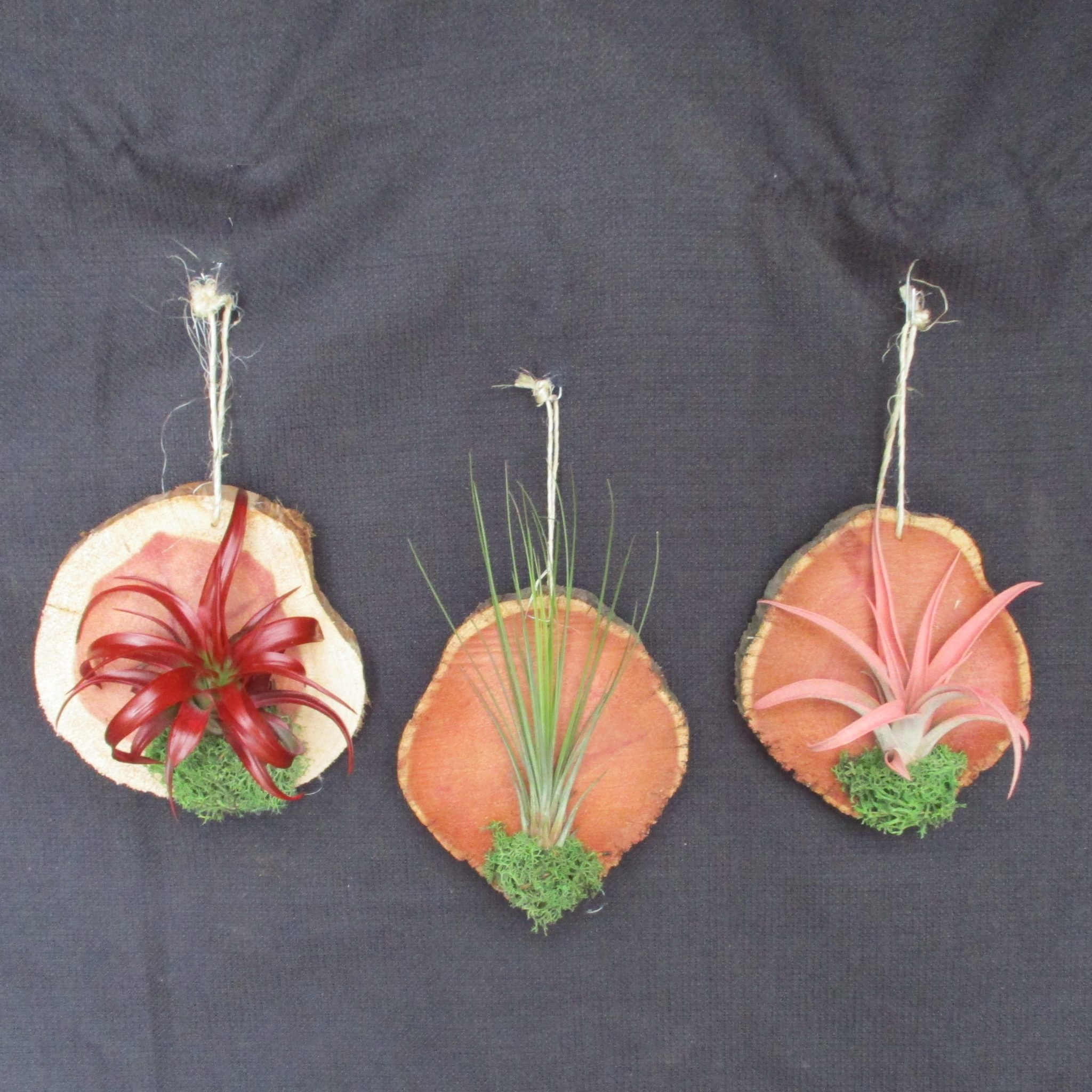 Wood Plaque With Air Plant